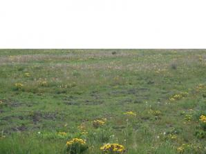 Terrain à vendre à Hilsenheim (67600)<span class='prix'> 57000 €</span> 57000
