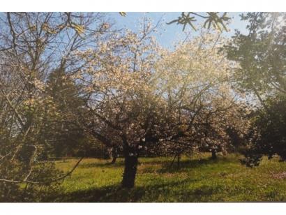 Terrain à vendre  à  Meyrargues (13650)  - 174900 € * : photo 1