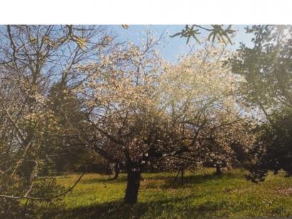 Terrain à vendre  à  Meyrargues (13650)  - 179900 € * : photo 1
