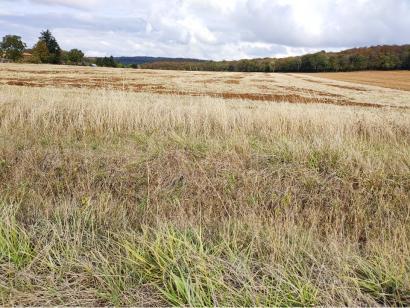 Terrain à vendre  à  Amnéville (57360)  - 66500 € * : photo 3