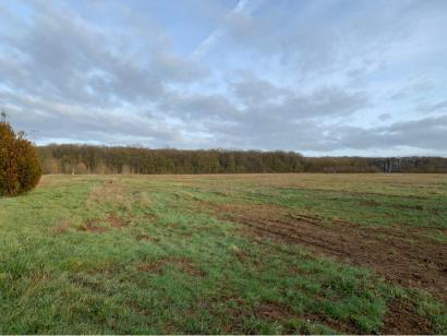 Terrain à vendre  à  Metzeresche (57920)  - 97500 € * : photo 2