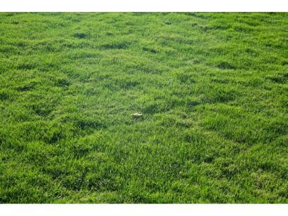 Terrain à vendre  à  L'Aiguillon-sur-Vie (85220)  - 81100 € * : photo 1