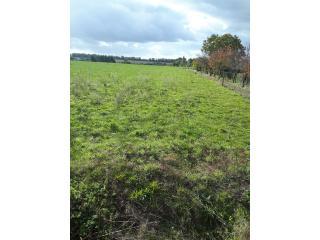 Terrain à bâtir à Landeronde (85150)
