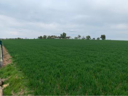 Terrain à vendre  à  Waldwisse (57480)  - 64350 € * : photo 1