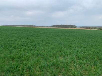 Terrain à vendre  à  Waldwisse (57480)  - 64350 € * : photo 2