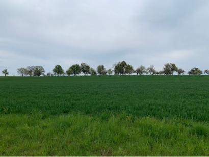Terrain à vendre  à  Waldwisse (57480)  - 64350 € * : photo 4
