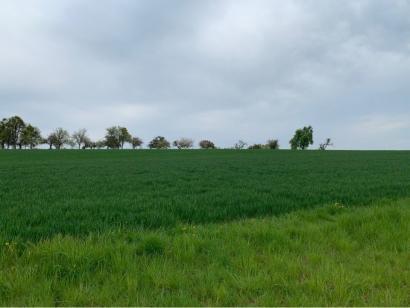 Terrain à vendre  à  Waldwisse (57480)  - 64350 € * : photo 5