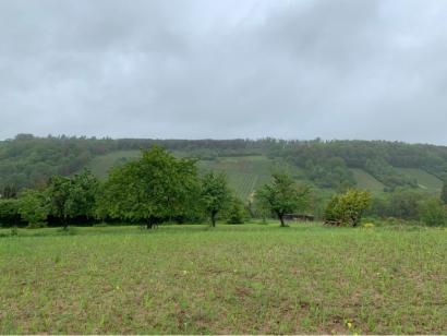 Terrain à vendre  à  Contz-les-Bains (57480)  - 130000 € * : photo 2