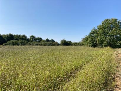 Terrain à vendre  à  Fontaine-le-Comte (86240)  - 62900 € * : photo 2
