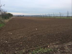 Terrain à vendre à Niederschaeffolsheim (67500)<span class='prix'> 123000 €</span> 123000