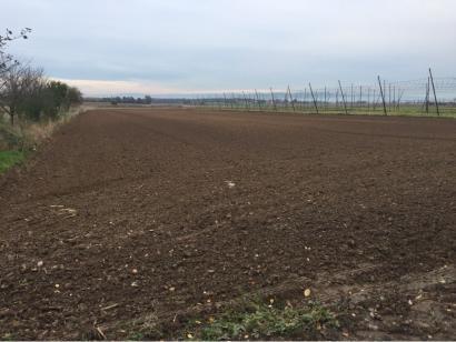 Terrain à vendre  à  Niederschaeffolsheim (67500)  - 123000 € * : photo 1